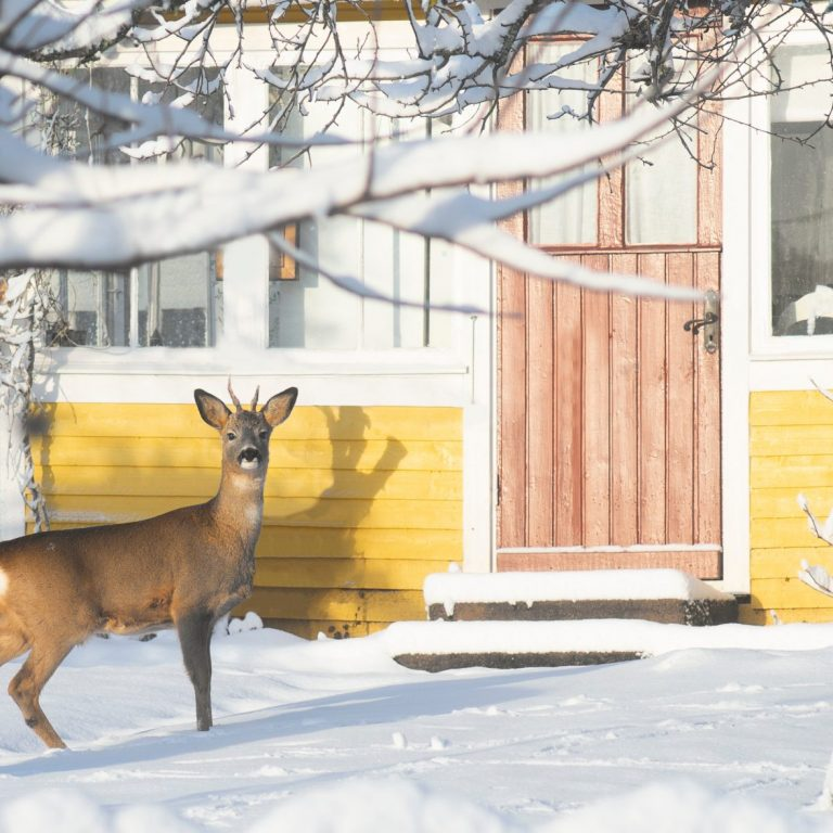 Don't let deer eat your trees and shrubs overwinter