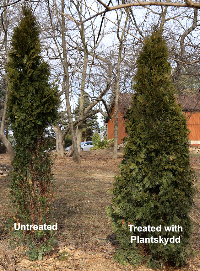 Plantskydd Treated vs. Untreated