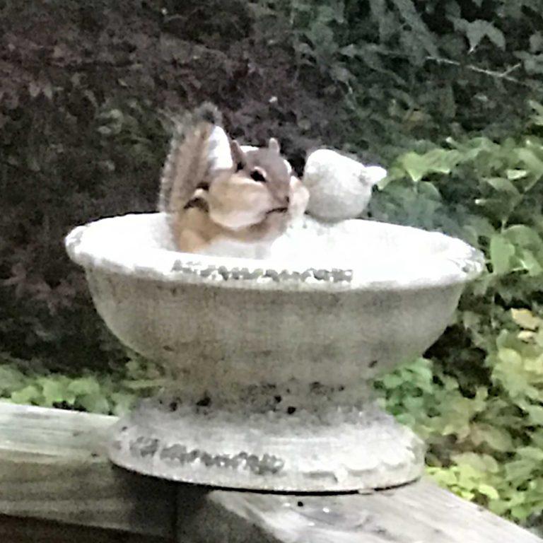 Chipmunks in your birdfeeder?