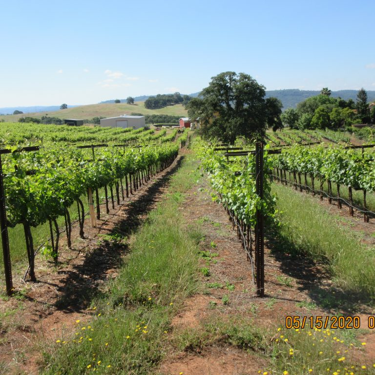 Viani Vineyards use Plantskydd for deer